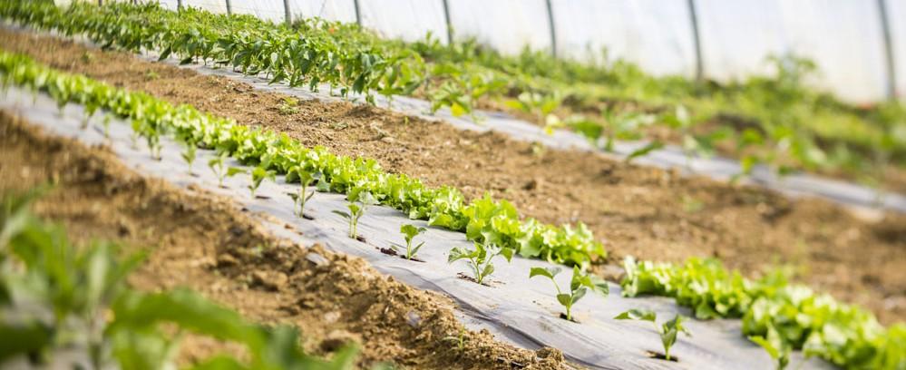 Dans la serre, les jeunes plants démarrent avec vigueur leur prometteuse croissance